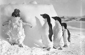 Penguins after blizzard