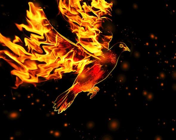 firey dove - Gary Buchanan